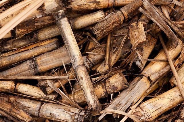 la-biomasse